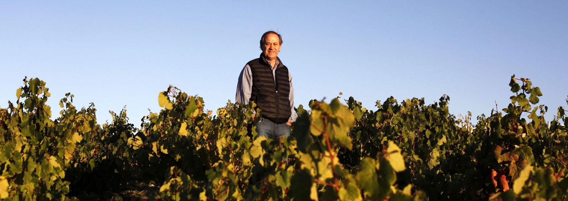 Edy in the vineyard