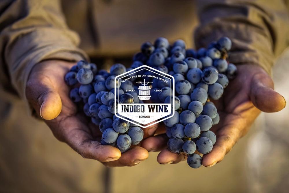 Indigo-Grapes