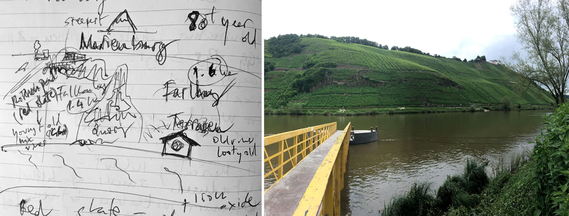 Vineyards opposite Clemens and Rita's house. The Sketch and the real thing!